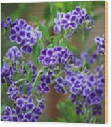 Blue Cottage Flowers Wood Print