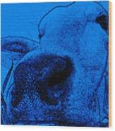 Blue Cow Wood Print