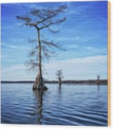 Blue Cypress Wood Print