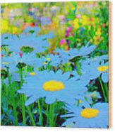 Blue Daisy Wood Print