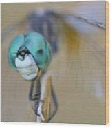 Blue Dasher Dragonfly #1 Wood Print
