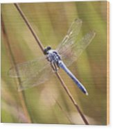 Blue Dragonfly Against Green Grass Wood Print