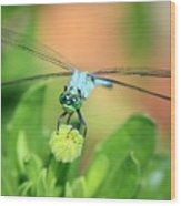 Blue Dragonfly And Bud Wood Print