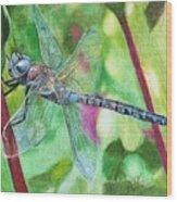 Blue Dragonfly Wood Print