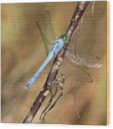 Blue Dragonfly Portrait Wood Print by Carol Groenen