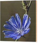 Blue Dream.. Wood Print