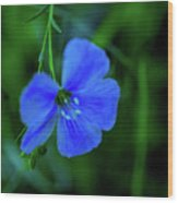 Blue Dreams 2 Wood Print by Shiela Kowing