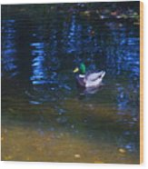 Blue Duck Wood Print