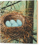 Blue Eggs In Nest Wood Print