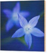 Blue Etoile Wood Print