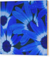 Blue Daisies, Medford Oregon Wood Print