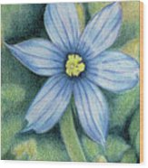 Blue Eyed Grass - 1 Wood Print