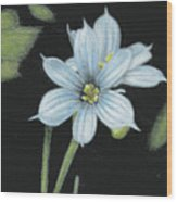 Blue Eyed Grass - 2 Wood Print