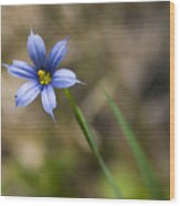 Blue-eyed Grass II Wood Print