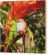 Blue Eyed Grasshopper 2 Wood Print