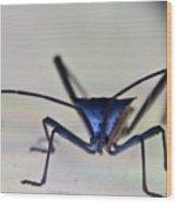 Blue-eyed Monster Wood Print