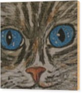 Blue Eyed Tiger Cat Wood Print