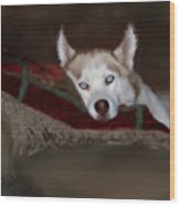 Blue Eyes Wood Print by Colleen Taylor