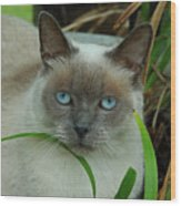 Blue Eyes In The Garden Wood Print