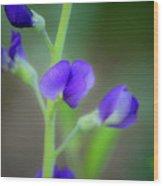Blue False Indigo Wood Print
