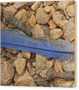 Blue Feather Wood Print
