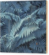 Blue Fern Leaves Abstract. Nature In Alien Skin Wood Print