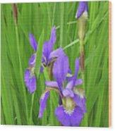 Blue Flag Iris-1  Wood Print
