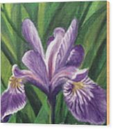 Blue Flag Iris Wood Print