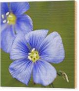 Blue Flax #2 Wood Print