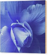 Blue Floral Begonia Wood Print