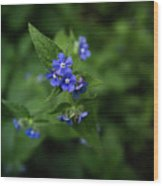 Blue Flower In Spring Wood Print