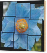 Blue Flower Photo Sculpture  Butchart Gardens  Victoria Bc Canada Wood Print