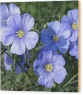 Blue Flowers In The Sun Wood Print