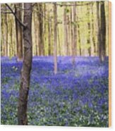 Blue Forest In Shadow Wood Print