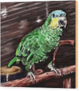 Blue-fronted Amazon Parrot Wood Print
