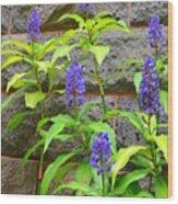 Blue Ginger At The Wall Wood Print