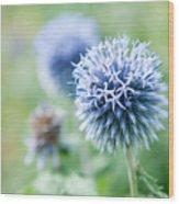 Blue Globe Thistle Flower Wood Print