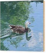 Blue Goose-1 Wood Print