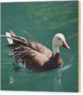 Blue Goose-3 Wood Print