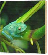 Blue-green Tropical Frog Wood Print