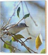 Blue Grey Gnatcatcher Wood Print