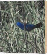 Blue Grosbeak At Rest Wood Print