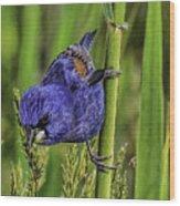 Blue Grosbeak On A Reed Wood Print
