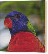 Blue Head Bird Wood Print