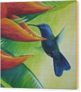 Blue-headed Hummingbird Wood Print