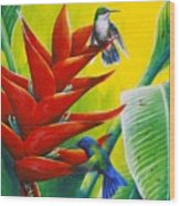Blue-headed Hummingbirds And Heliconia Wood Print