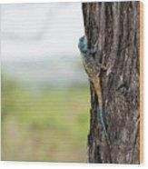 Blue-headed Tree Agama Wood Print