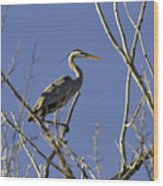 Blue Heron 22 Wood Print by Roger Snyder