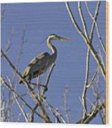 Blue Heron 22 Wood Print