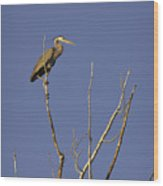 Blue Heron 28 Wood Print